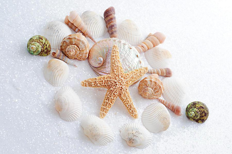 Seashells Photograph - North Carolina Sea Shells by Andee Design