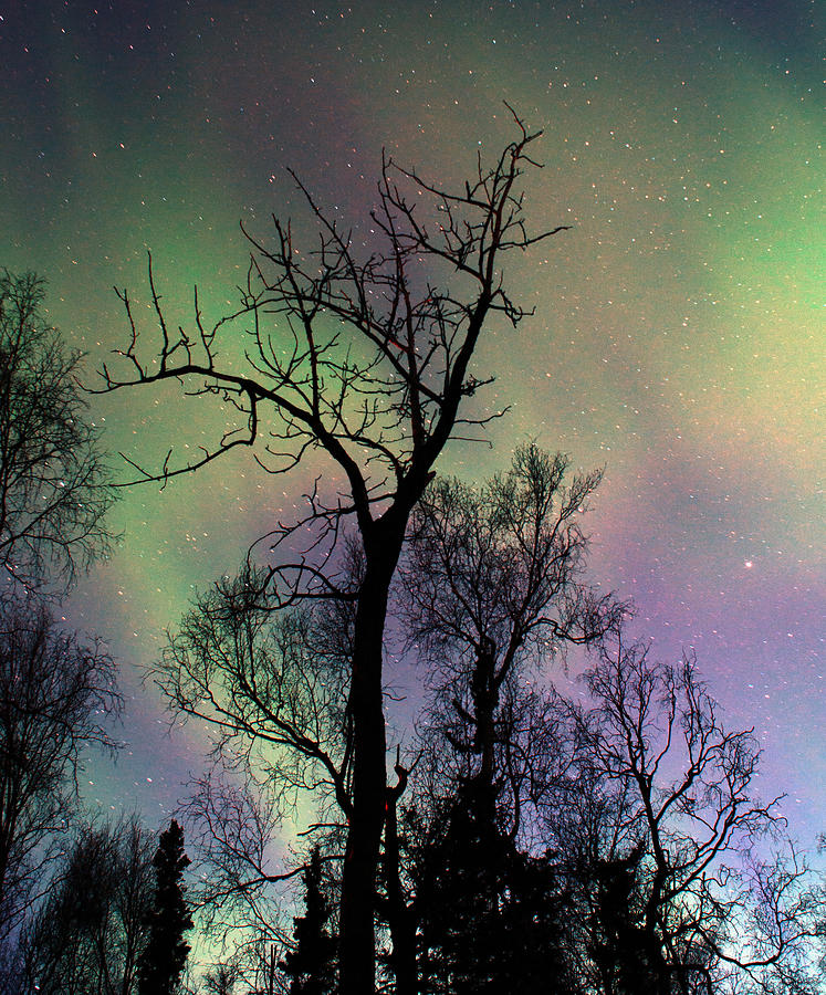 Northern Lights Cottonwood Photograph