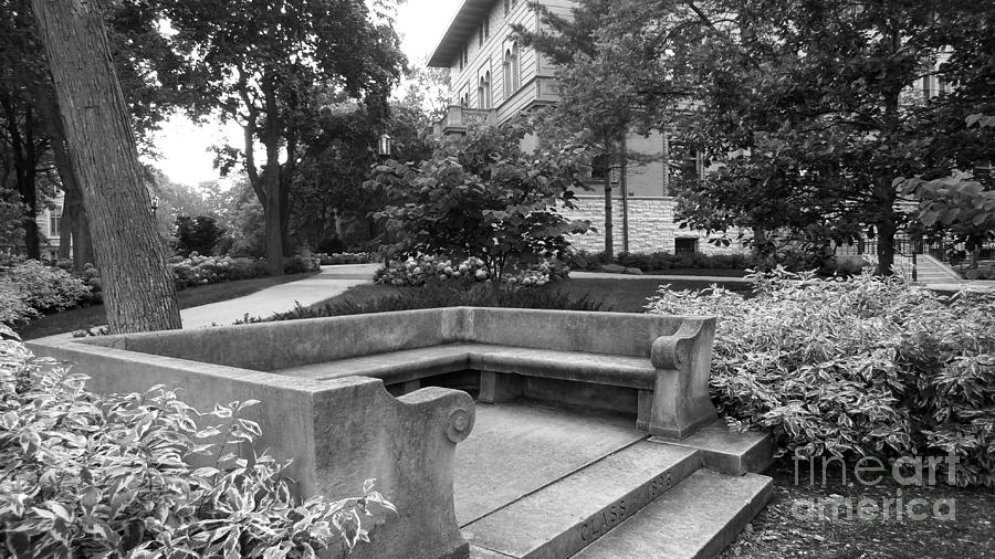 Northwestern University Bench Photograph  - Northwestern University Bench Fine Art Print