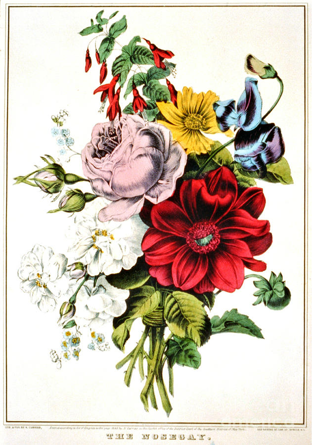 Nosegay 1848 Photograph