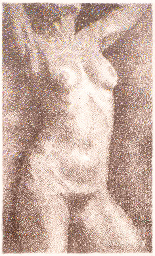 Nude Female Torso Drawings 2  Drawing  - Nude Female Torso Drawings 2  Fine Art Print