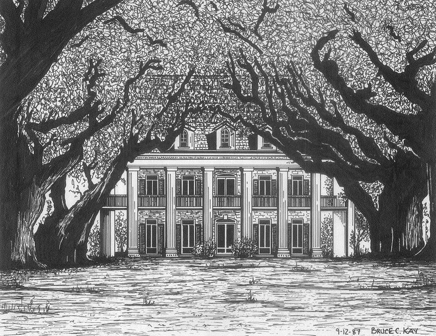 Oak Alley Drawing  - Oak Alley Fine Art Print