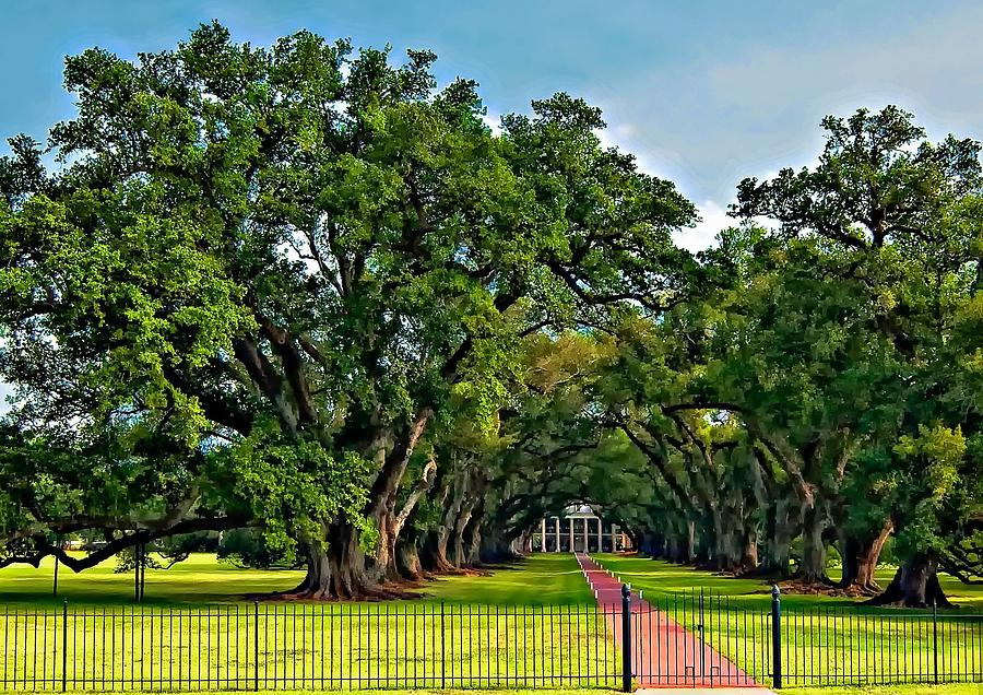 Oak Alley Plantation 2 Photograph  - Oak Alley Plantation 2 Fine Art Print