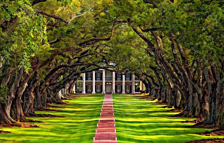Oak Alley Photograph  - Oak Alley Fine Art Print
