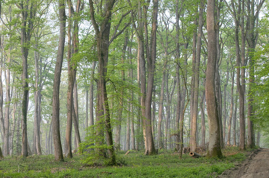 http://images.fineartamerica.com/images-medium-large-5/oak-forest-of-troncais-bourbonnais-christian-guy.jpg