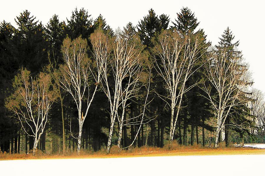 Oak Line Photograph by Susan McMenamin