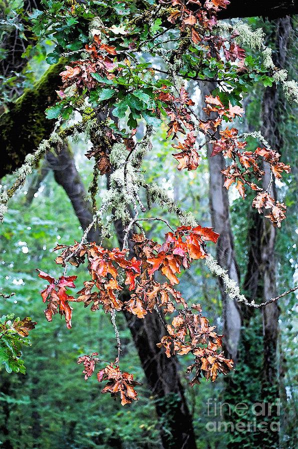 Oak Photograph - Oak Stories by Gwyn Newcombe