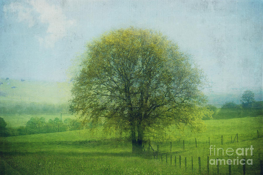 Oak Tree In Spring Photograph
