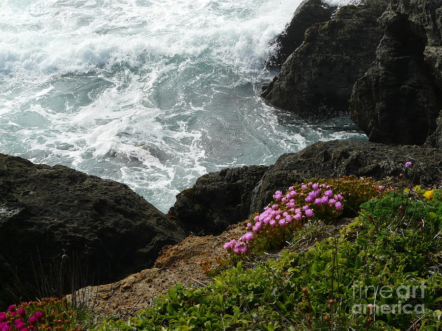 Ocean Wildflowers-2 Photograph