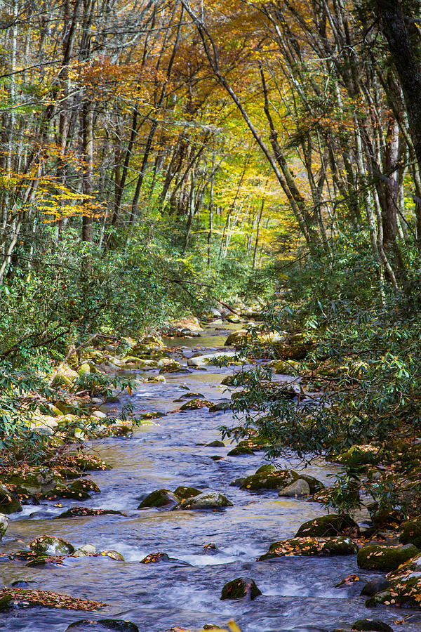 Oconaluftee River In The Gsmnp Photograph  - Oconaluftee River In The Gsmnp Fine Art Print