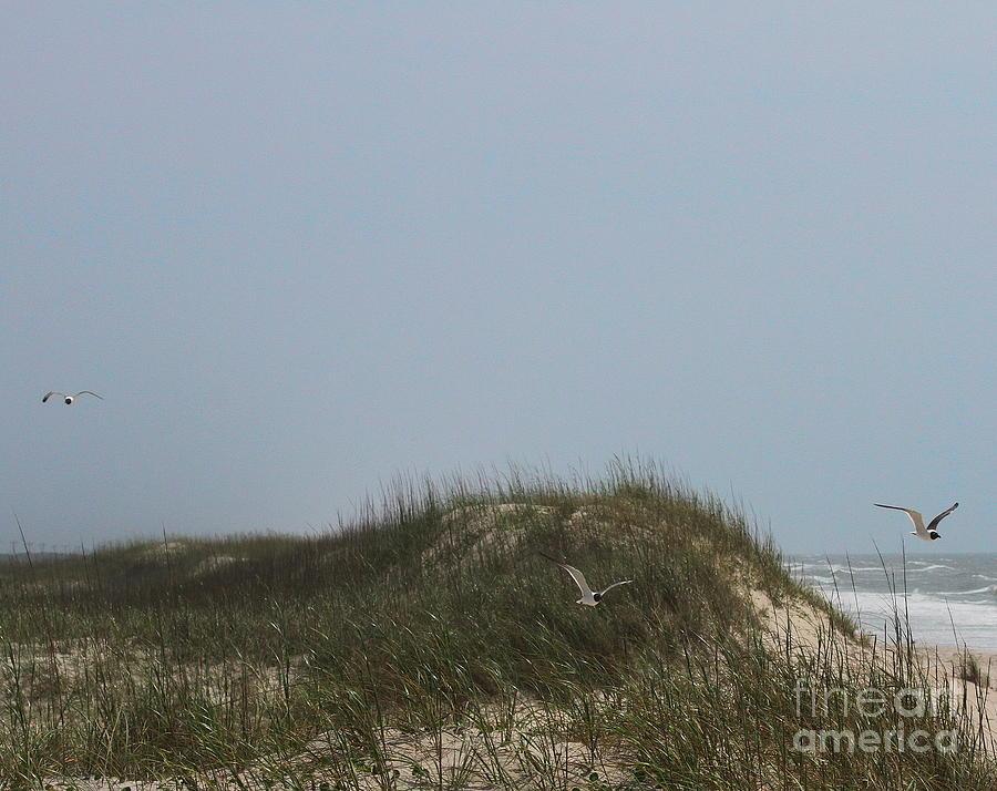 Seagull Photograph - Ocracoke Dunes And Gulls by Cathy Lindsey