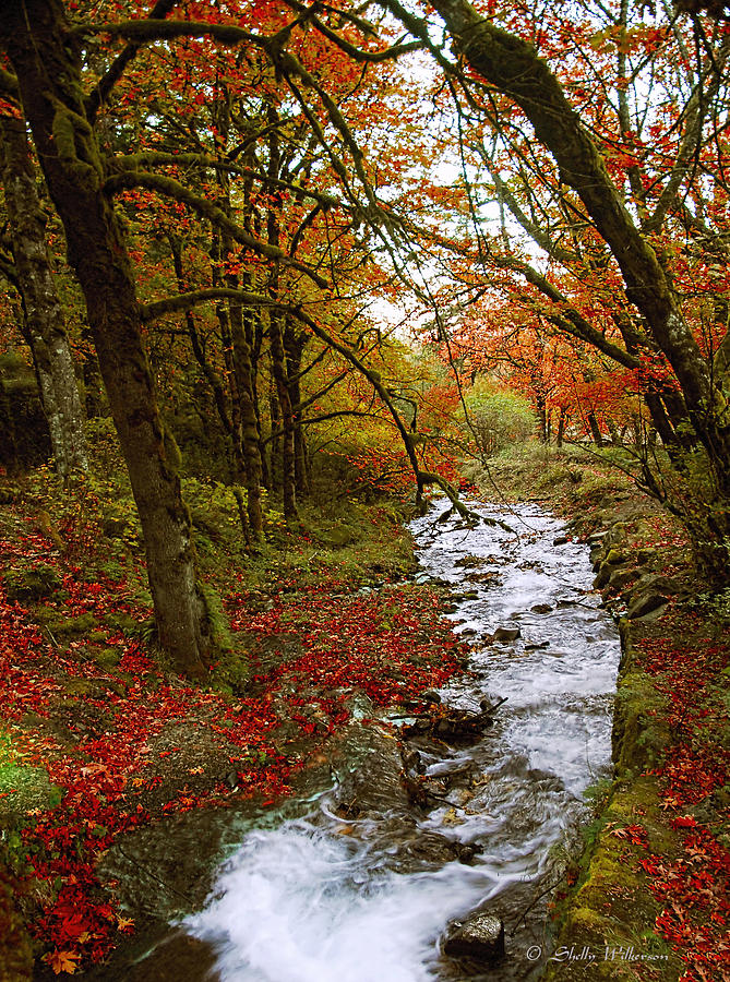 October In Oregon Photograph By Shelly Wilkerson