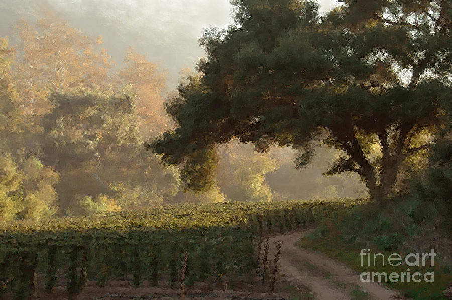 Ojai Vineyard Photograph  - Ojai Vineyard Fine Art Print