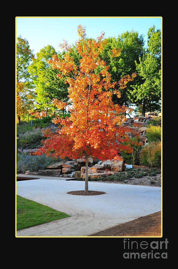 Fall Photograph - Oklahoma Fall by Randi Grace Nilsberg