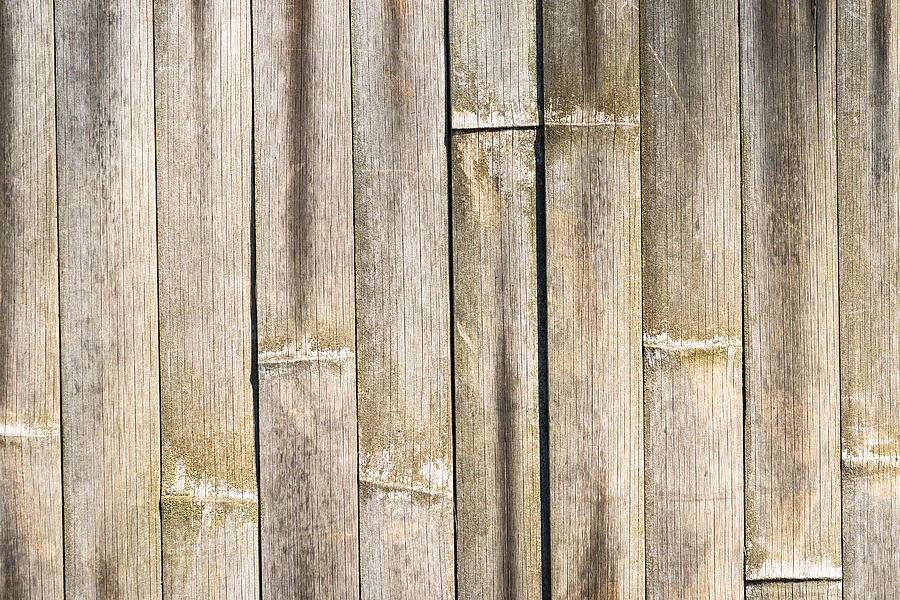 Old Bamboo Fence Photograph