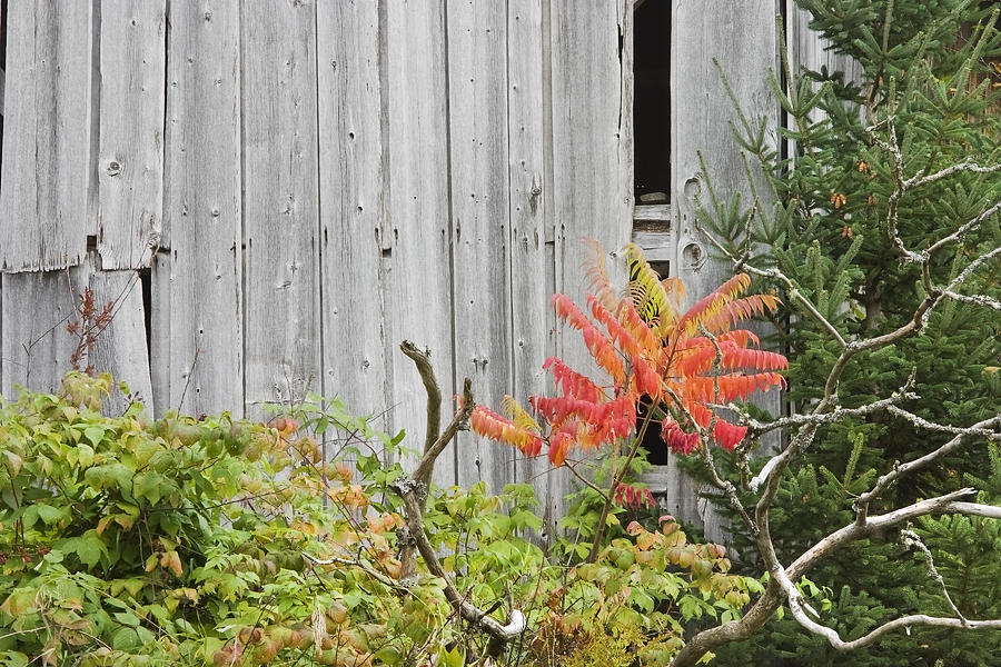 Old Barn In Fall Photograph