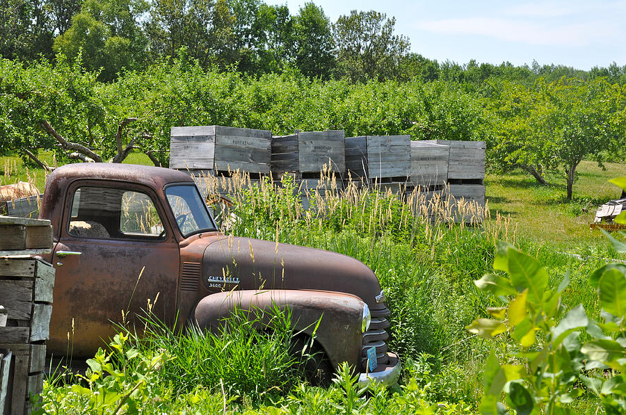 Orchard Photograph - Old Chevy Pickup In Orchard by Jeremy Evensen