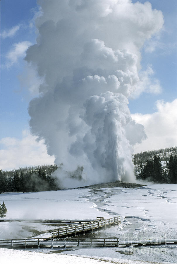 Old Faithful In Her Glory - Yellowstone Photograph