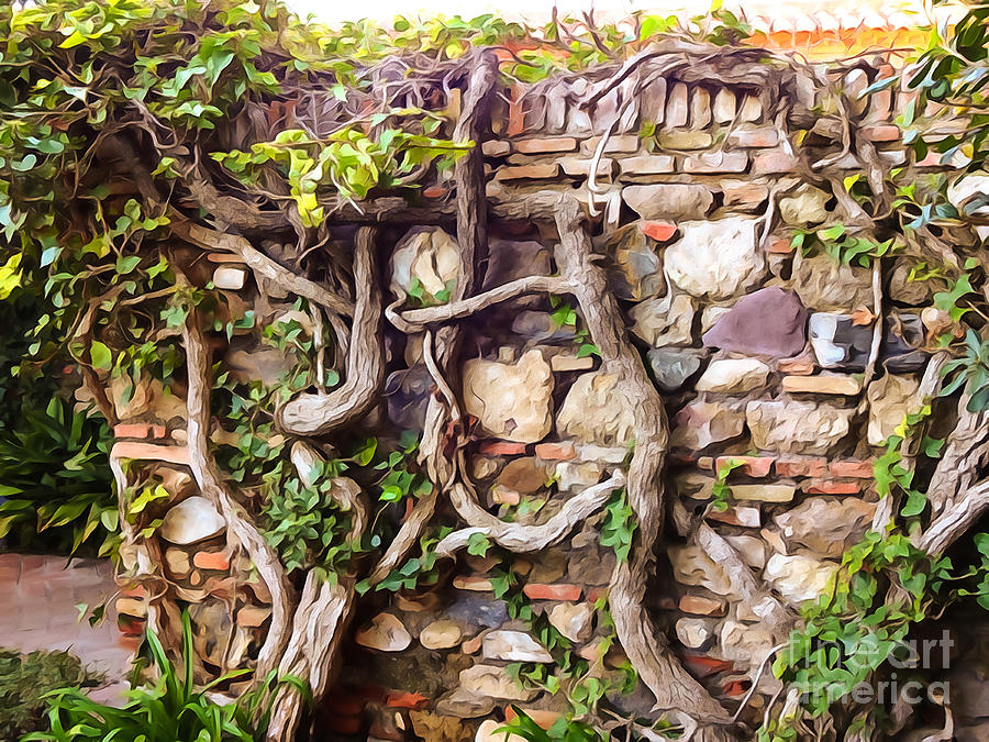 Old Garden Wall Photograph
