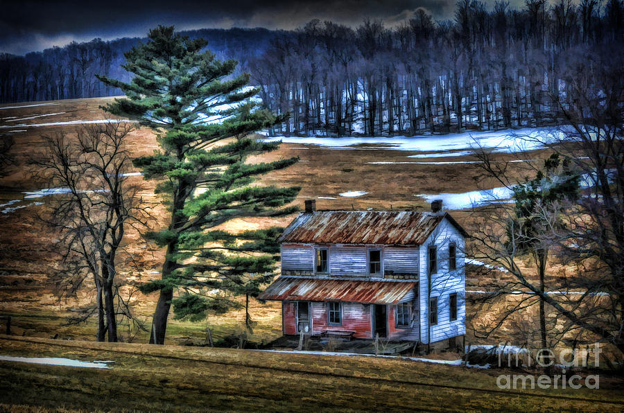 Old Home Place Beside Pine Tree Photograph