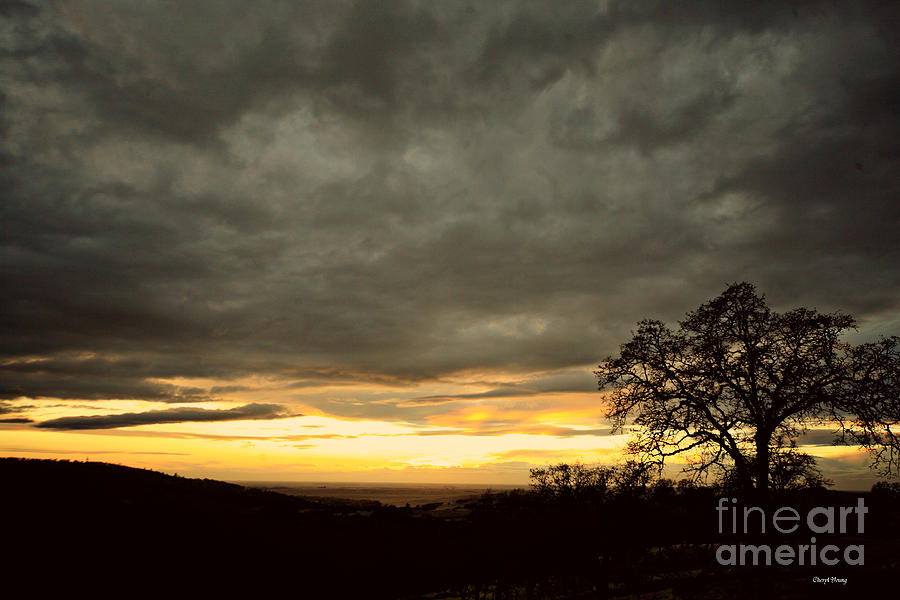 Old Oak Photograph  - Old Oak Fine Art Print