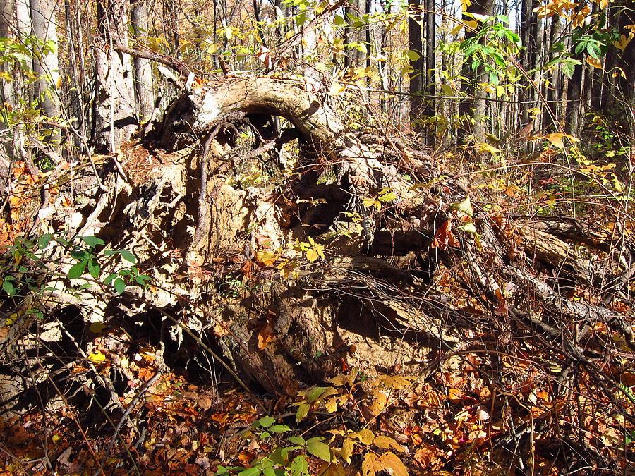 Old Rag Hiking Trail - 12123 Photograph