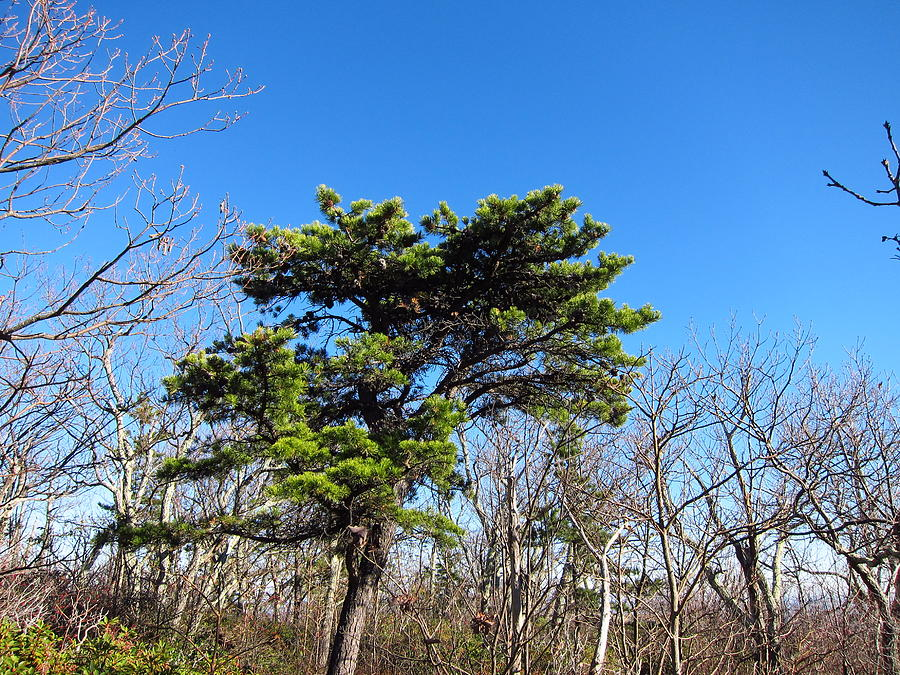 Old Rag Hiking Trail - 121242 Photograph