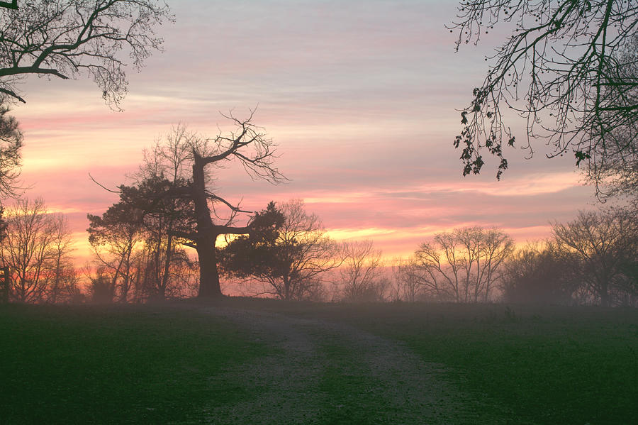 Old Tree At Sunset Photograph