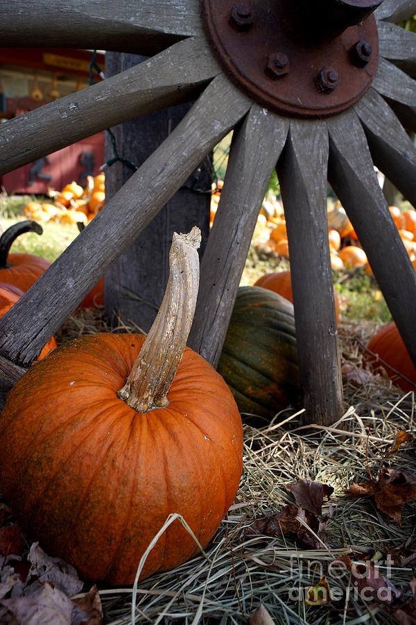 Old Wheel Pumpkin Photograph