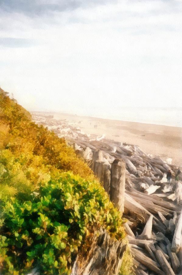 Olympic Peninsula Driftwood Photograph