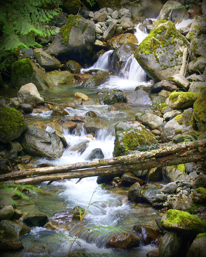 Olympic Range Stream Photograph  - Olympic Range Stream Fine Art Print
