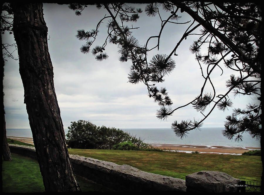 Normandy Photograph - Omaha Beach Under Trees by Joan  Minchak