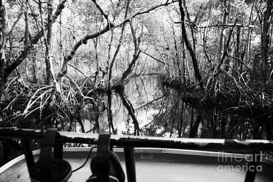 On Board An Airboat Ride Through A Mangrove Jungle In Everglades City Florida Everglades Photograph  - On Board An Airboat Ride Through A Mangrove Jungle In Everglades City Florida Everglades Fine Art Print