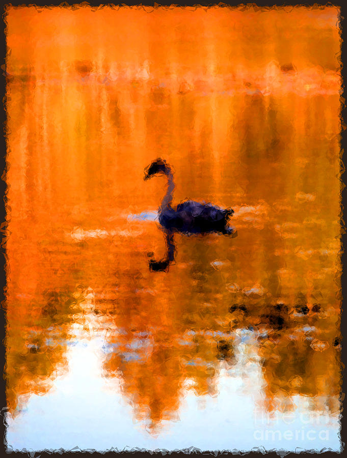 Swan Photograph - On Golden Pond by Jack Gannon