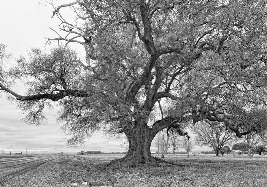 On The Delta Monochrome Photograph  - On The Delta Monochrome Fine Art Print