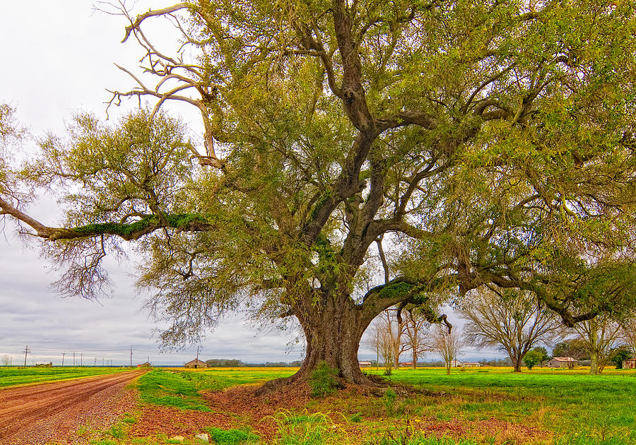 On The Delta Photograph  - On The Delta Fine Art Print