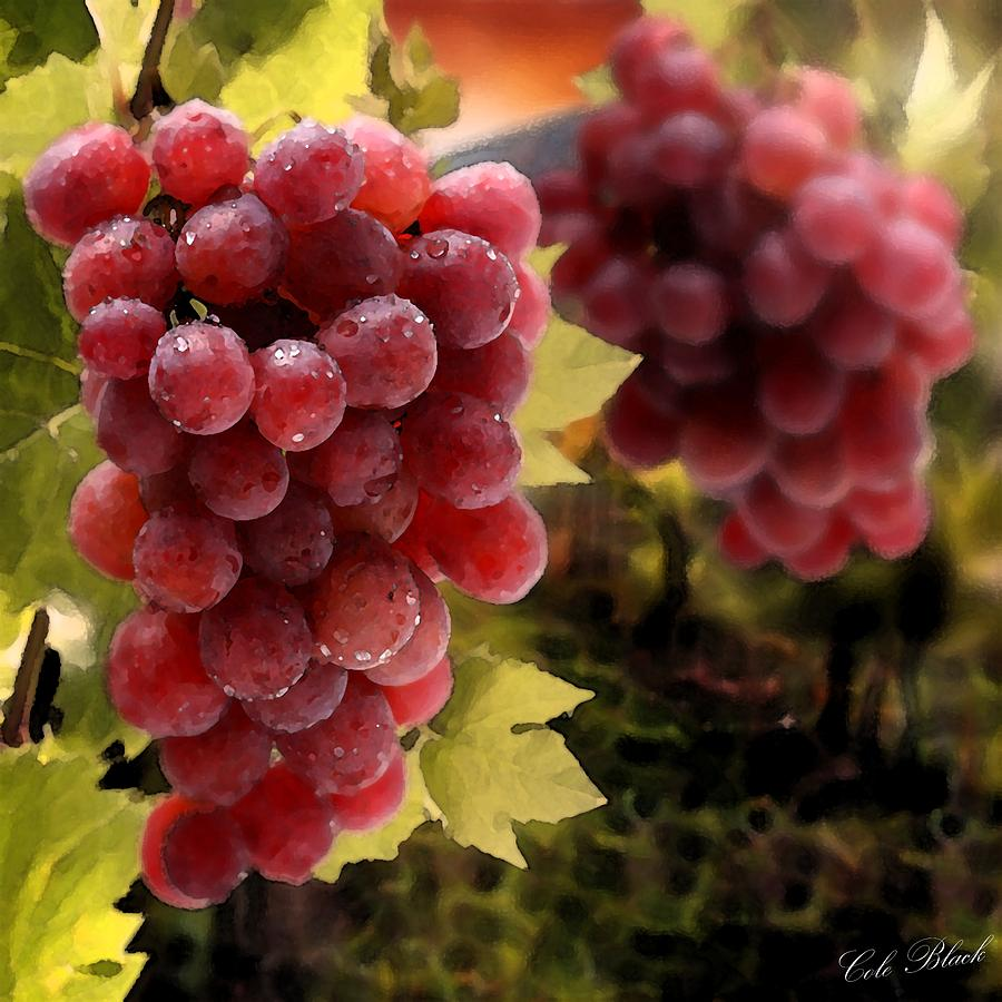 On The Vine Painting  - On The Vine Fine Art Print