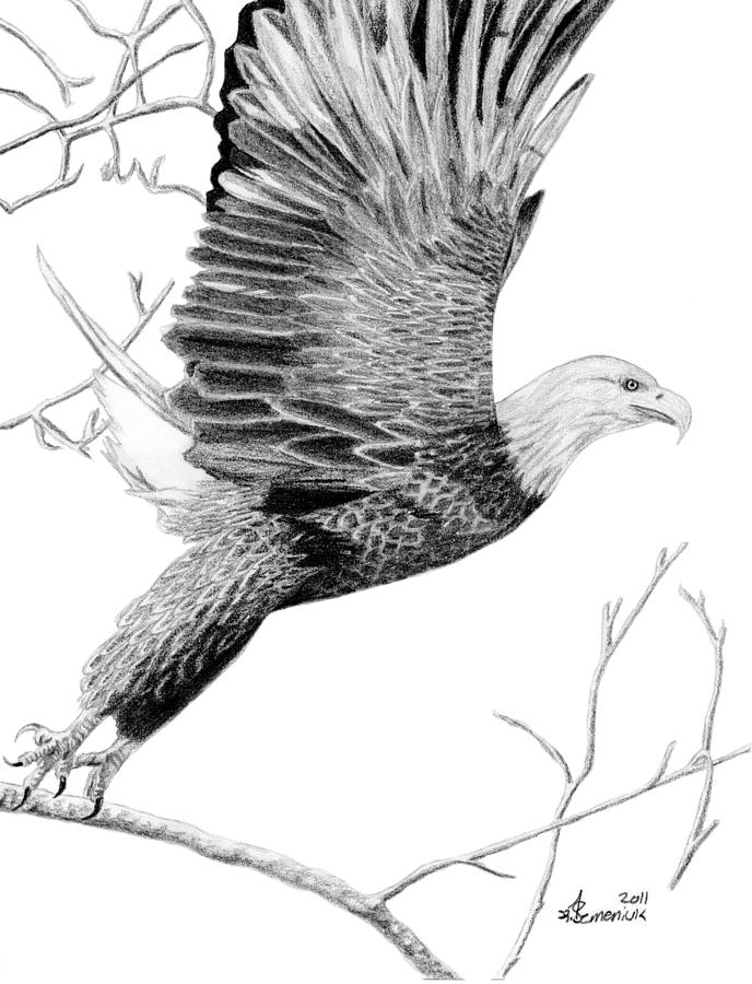 Bald Eagle Drawings - On the  Eagle Wings Drawing