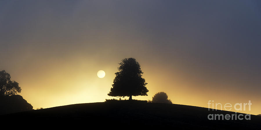 Horse Chestnut Photograph - One Foggy Morning by Tim Gainey