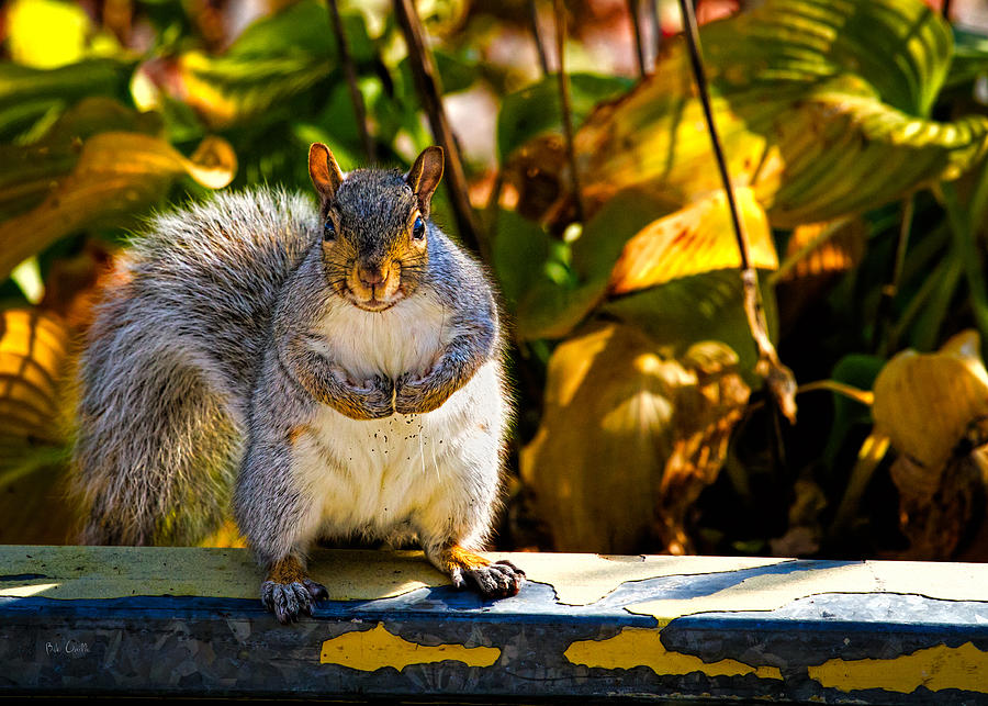 One Gray Squirrel Photograph