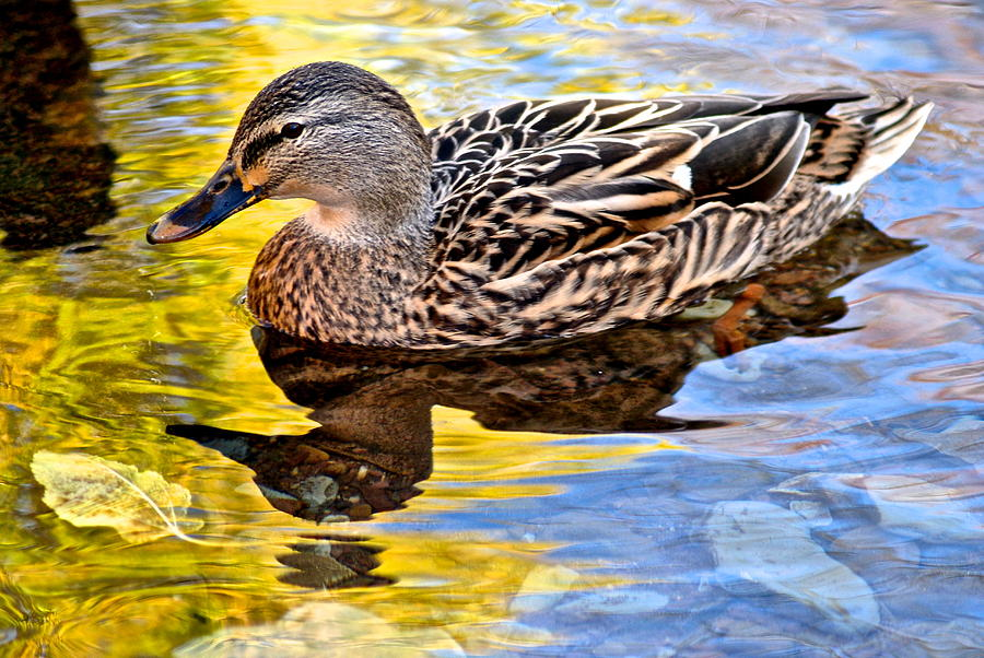 One Leaf Two Ducks Photograph  - One Leaf Two Ducks Fine Art Print