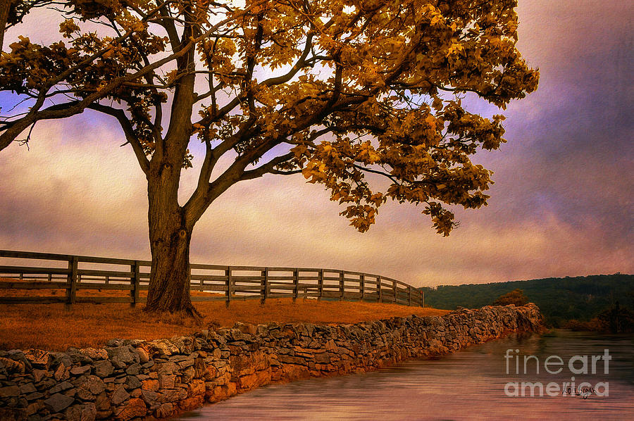 One Tree Hill Photograph  - One Tree Hill Fine Art Print