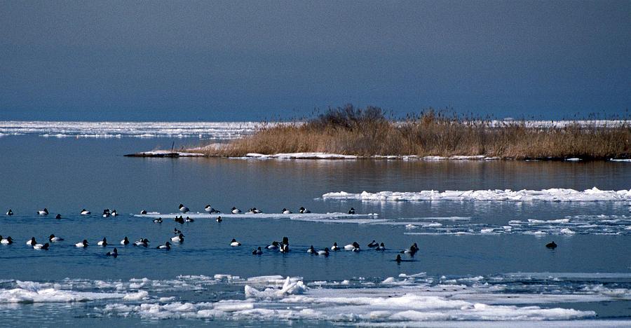 Open Water Photograph