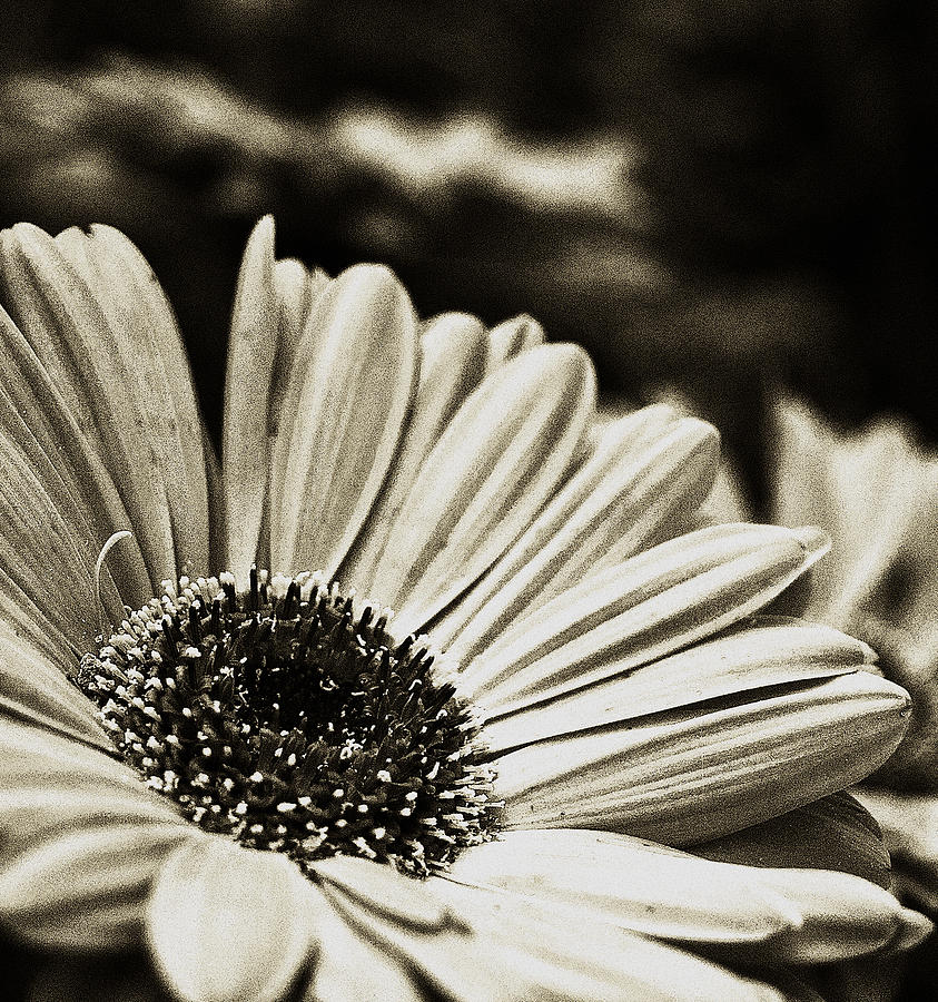 Flowers Photograph - Openly Honest by Tanya Jacobson-Smith