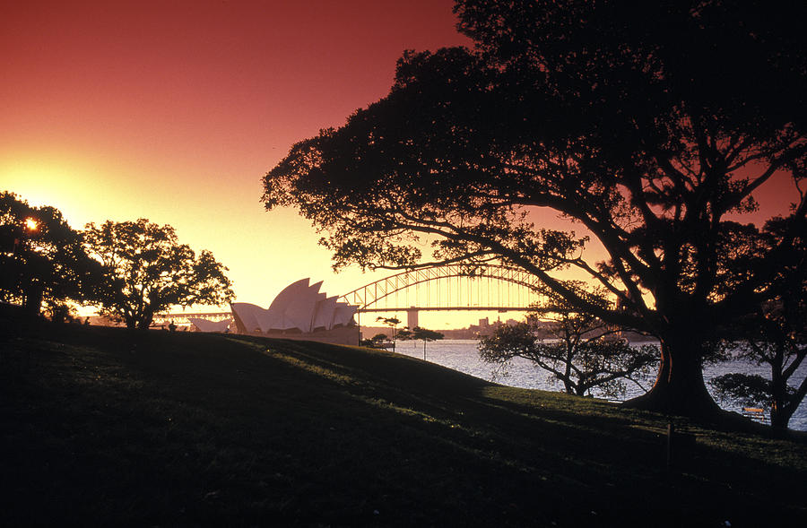 Sydney Photograph - Opera Tree by Sean Davey