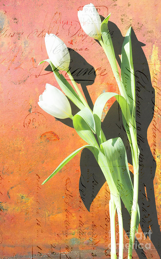 Orange Abstract Tulips Mixed Media  - Orange Abstract Tulips Fine Art Print