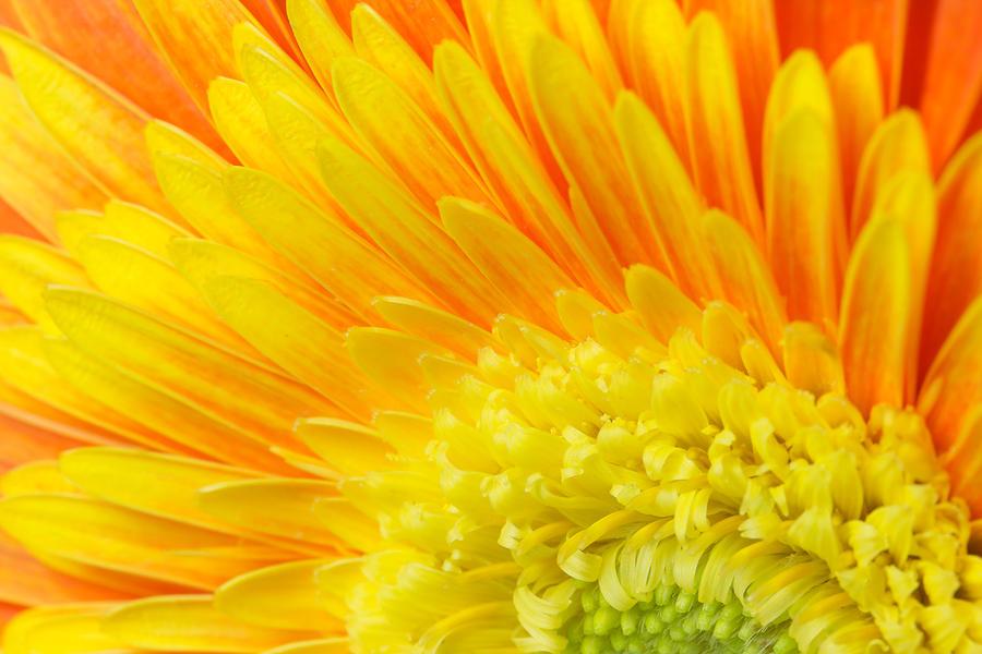 ... Photograph - Orange And Yellow Chrysanthemum Flower by Jaroslav Frank