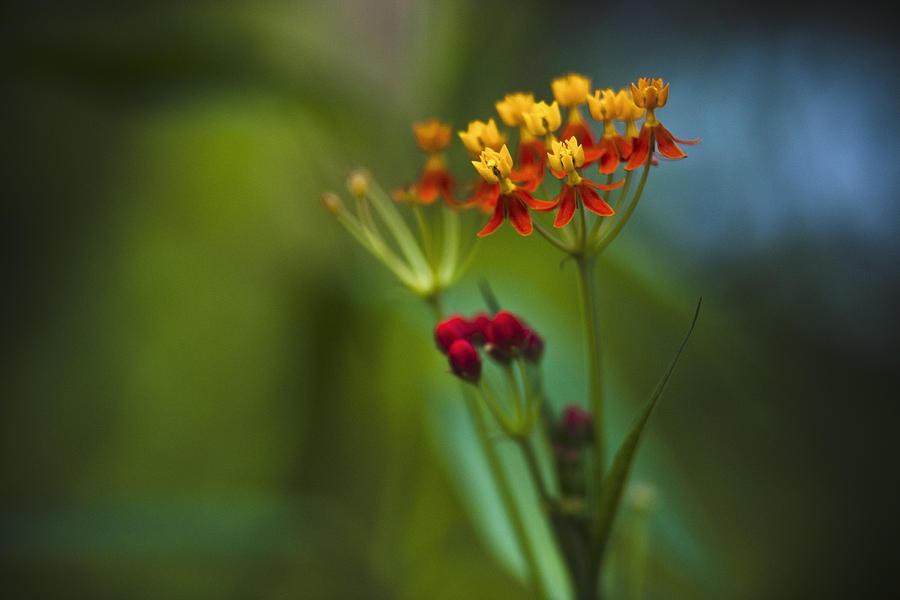 Orange And Yellow Flowers Photograph