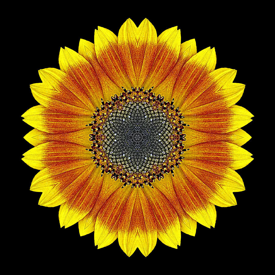 Orange And Yellow Sunflower Flower Mandala Photograph