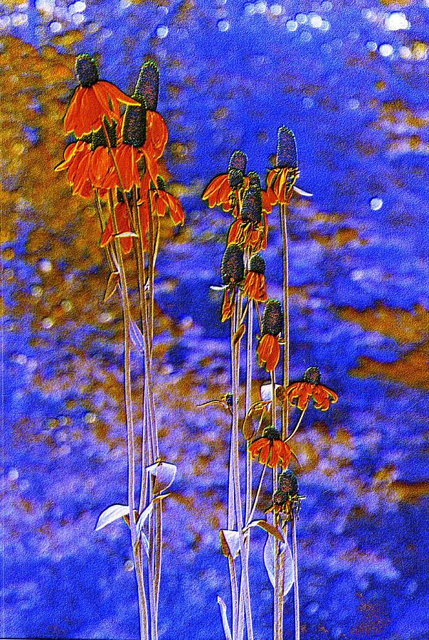 Orange Cones Photograph